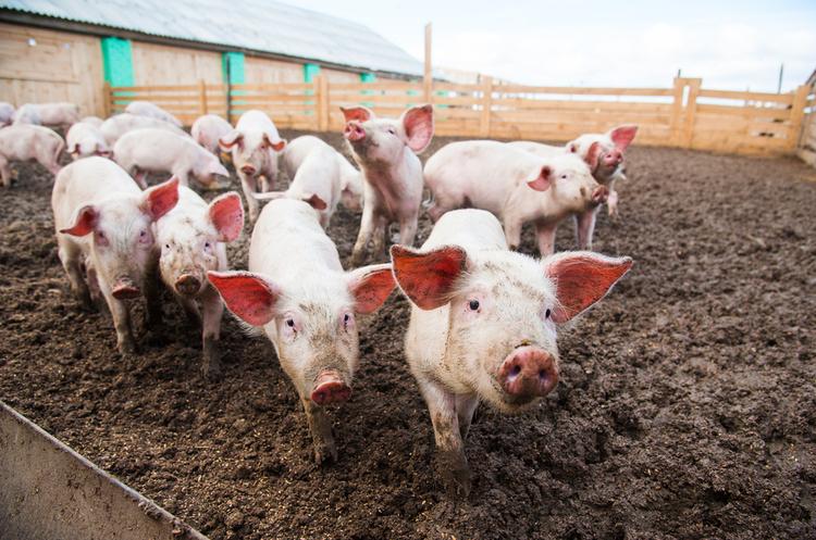 Країни ЄС погодилися на проведення масштабної аграрної реформи
