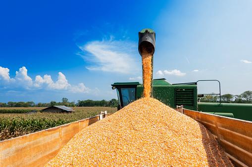 Аграрії попереджають про ризики обвалу ринку зернових