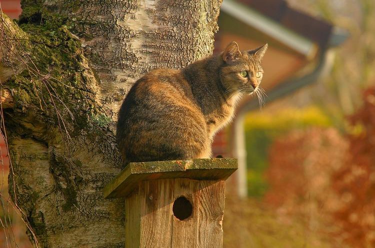 Коти обходяться економіці Австралії у $4,3 млрд щорічно через розповсюдження хвороб