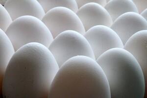 Eat Just готова до запуску продажів яєць на рослинній основі в Західній Європі