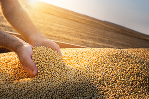 Україна експортувала 17 млн т зерна з нового урожаю