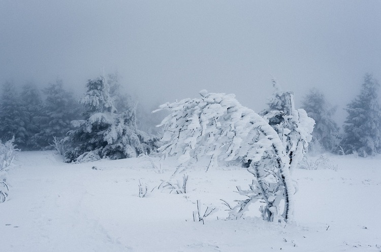 Працює і в бурю, і в снігопад: перші тести супутникового інтернету Starlink