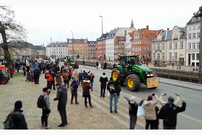 Фермери на тракторах окупували вулиці Копенгагена на знак протесту проти вбивства норок (ВІДЕО)