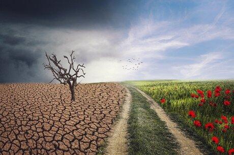 Глобально жарко: как агробизнесу работать с изменениями климата