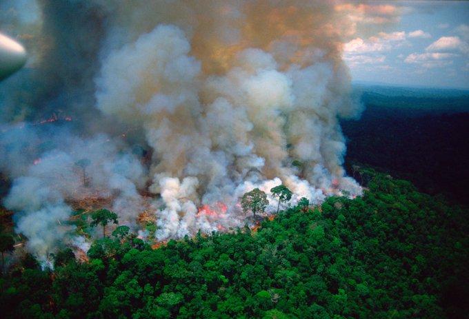 У Бразилії площа вирубки дощових лісів Амазонії досягла максимуму за 12 років