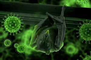 Выживают не все: почему COVID-19 вернет внимание к борьбе с бактериями