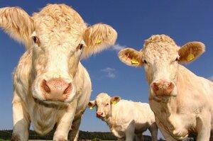 Антиметеоризм для коров и еще 5 высокотехнологичных изобретений в АПК