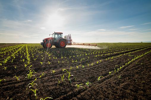 Сільгоспвиробництво в Україні у 2020 році впало на 11,5%