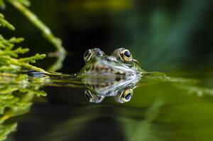 Зелена планета: які ще нові види істот знайшли на Землі у 2020 році
