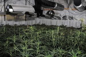 У центрі Лондона у порожньому офісному центрі виявили ферму з вирощування канабісу