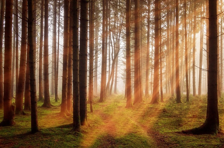 Збережемо ліси: вчені вслід за штучним м'ясом створили штучну деревину