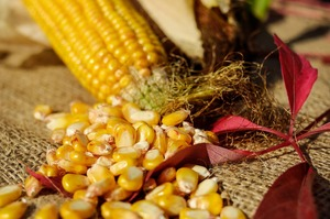 Мінекономіки та учасники зернового ринку узгодили граничний обсяг експорту кукурудзи на 2020/2021 МР