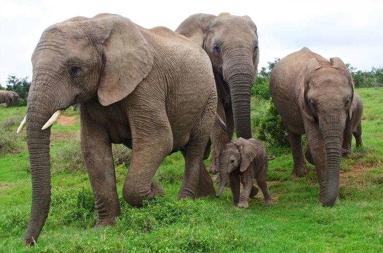 Скільки коштує слон? Економісти намагаються підрахувати вартість всієї живої природи