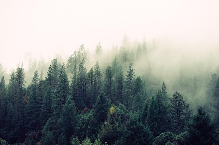 IKEA придбала понад 4 000 гектарів лісу у США, щоб захистити унікальні види тварин і рослин від впливу людей