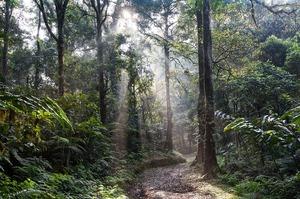 Ділянки тропічних лісів Амазонки виставили на продаж у Facebook