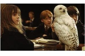 Warner Bros. заборонила використовувати живих сов у шоу про Гаррі Поттера