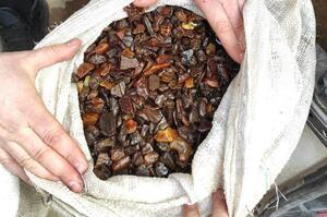 На Рівненщині правоохоронці вилучили 43 кг бурштину