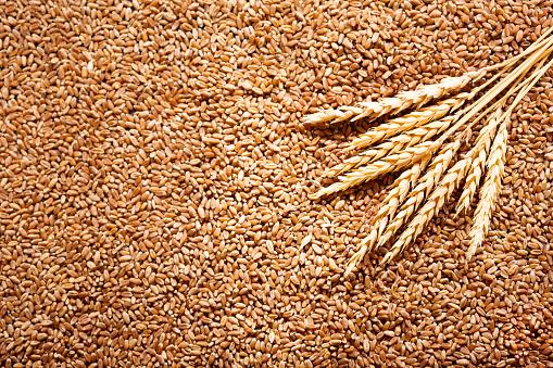Від початку року продаж зернових та олійних зменшився майже на третину