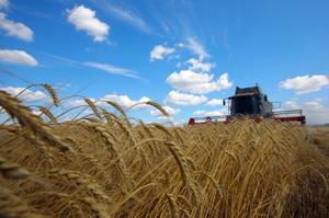 Уряд додав шість програм до держпідтримки аграріїв