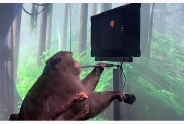Стартап Маска показав відео з мавпою, яка грає у відеогру за допомогою вживленого в мозок нейрочипа