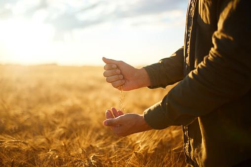 Експорт зернових уже сягнув 37 млн т