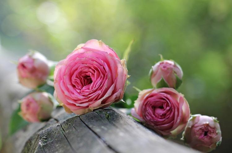 Україна введе спецмито у 56% на імпорт троянд