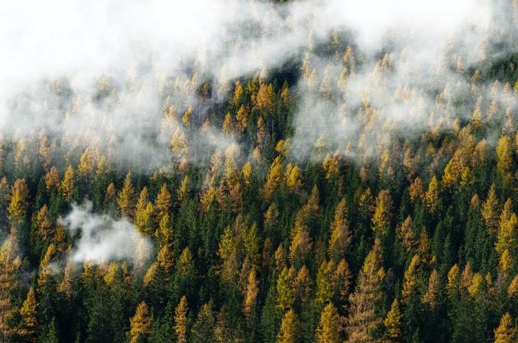 Кабмін затвердив порядок проведення інвентаризації лісів