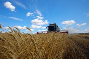 Рада ухвалила в першому читанні закон про державну підтримку страхування сільгосппродукції