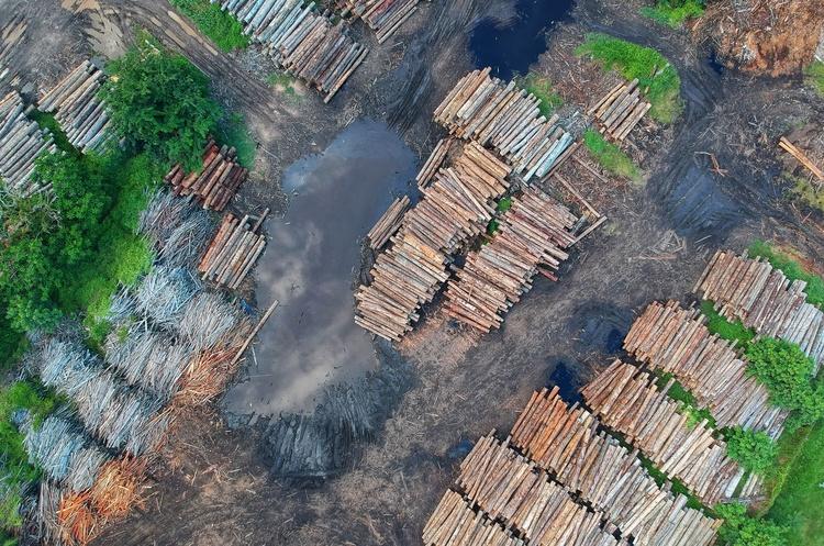 Протягом І кварталу 2021 року українським лісам було завдано збитків на майже на 54 млн грн