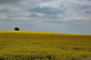 Вартість землі може зростати від 2 до 5 разів після запуску ринку – Шмигаль