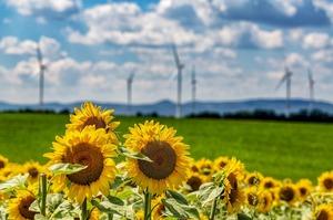 «Зелена» енергетика розвивається найшвидшими темпами з 1999 року – МЕА