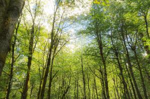 Британія потроїть темпи висадки дерев для досягнення вуглецевої нейтральності до 2050 року