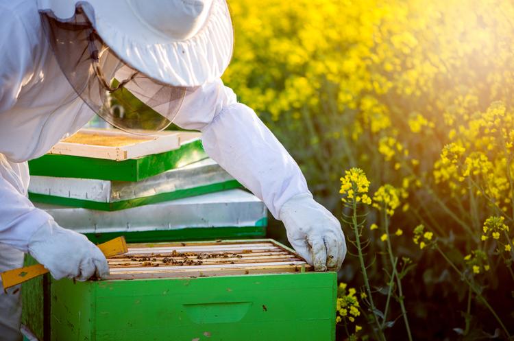 Спасти полосатых: как депутаты хотят противостоять отравлению пчел