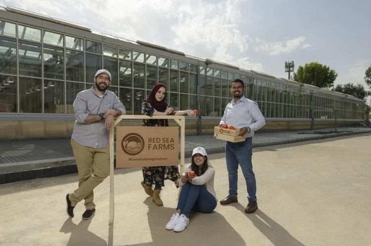 Саудівський агро-стартап Red Sea Farms залучив $10 млн фінансування