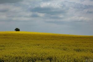 Більше 6 млн га сільськогосподарських земель потребують консервації – Лещенко