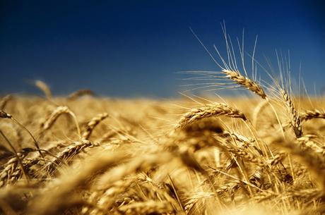 Куда продать: перспективные рынки для экспорта украинского зерна