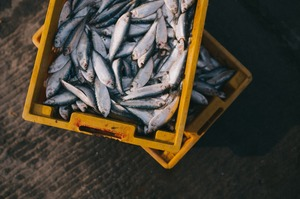 Україна збільшила вилов риби в Азовському морі на 42%