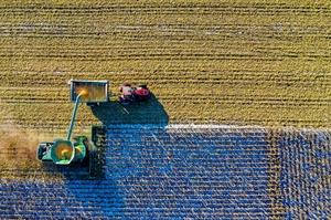В Україні завершили весняну посівну кампанію