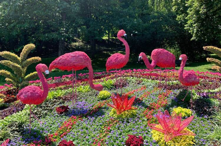 Дикі тварини у центрі Києва: в столичному парку стартувала літня виставка квітів