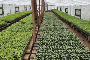 Органіка – це щирість: як «Дунайський Аграрій» завойовує ринок органічної продукції