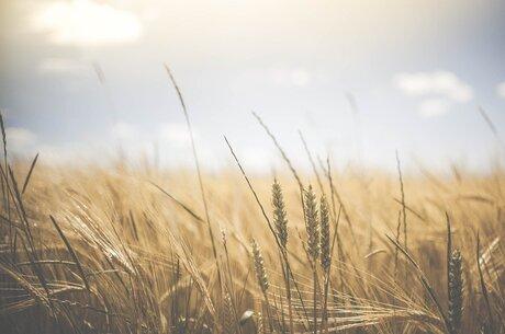 Стартові умови: яка роль банків у продажі землі в Україні