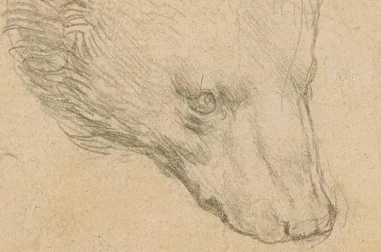 Ескіз «Голова ведмедя» роботи Да Вінчі продали на аукціоні за $12 млн