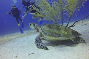 ЮНЕСКО не включила Великий Бар'єрний риф у список об'єктів, що перебувають «під загрозою»