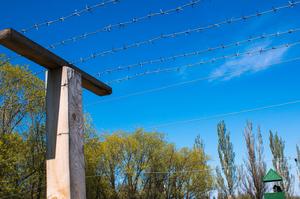 Литві не вистачило колючого дроту для будівництва паркану на кордоні з Білоруссю