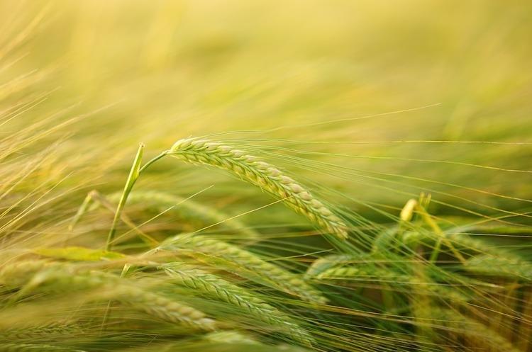 Світові запаси продовольства постраждали від посухи, повеней та морозів