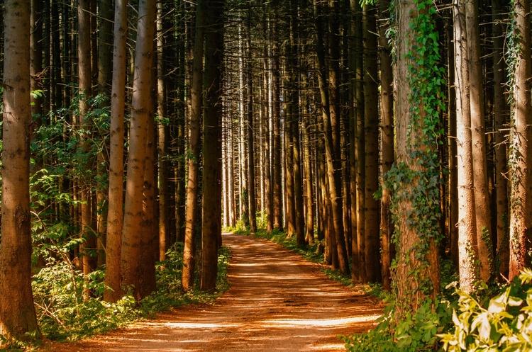 ДБР викрила співробітників лісгоспів у незаконній вирубці лісу в Житомирській та Харківській областях