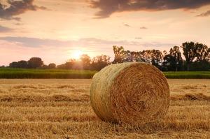 Українці продали майже 6 000 га землі за перший місяць роботи ринку