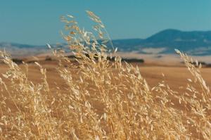 «Укргазбанк» видав перший в Україні кредит на купівлю сільськогосподарської землі