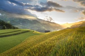 Середня ціна гектара сільськогосподарської землі складає 26 800 грн – УКАБ