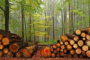 Україна почала жити в екологічному боргу – голова Держекоінспекції